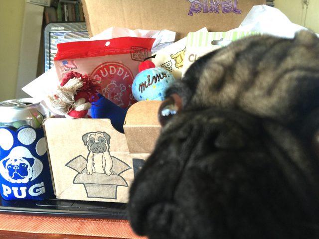 June Pug Box